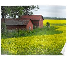 Red Sheds, Yellow Fields Poster