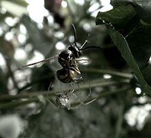 Spider vs Wasp by Ollie de Brett