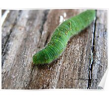 Rusty The Caterpillar Poster
