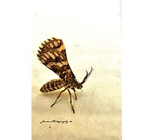 The Mothman Photographic Print