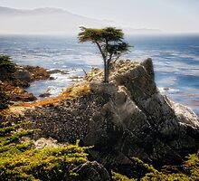Lone Cypress by George Oze