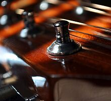 Strings by Trish Woodford