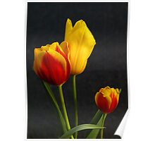 Tulips of orange and yellow Poster