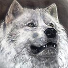 white wolf by Jonesy7