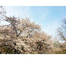 8 Bit Pixel Sakura Photographic Print