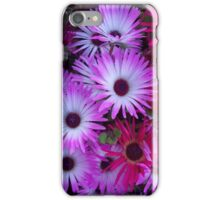 Dazzling Livingstone Daisies iPhone Case/Skin