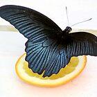 Blue Butterfly by Dan Shiels