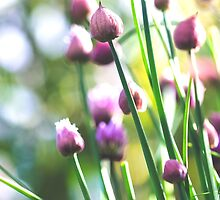 Chive Bouquet I by ghd-photography