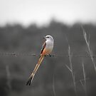 bird on a wire by womoomow