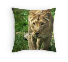 Kalinga the Asiatic Lioness Throw Pillow