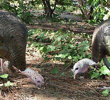 Timing turkeys is tough by Lenny La Rue, IPA