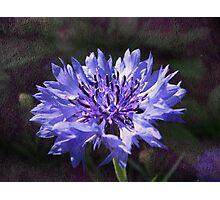Tactile Fleur de Bleu Photographic Print