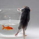 My pet fish by Ellen van Deelen