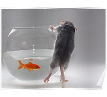 My pet fish Poster