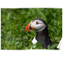 Puffin in Greenery Poster