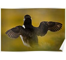 Wing Stretching Puffin Poster