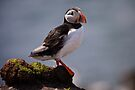 Puffin Rock by David Lewins