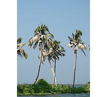 Birds on Palms Photographic Print