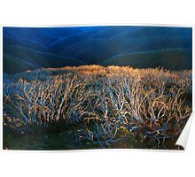 Fire Ravaged Snow Gums Poster