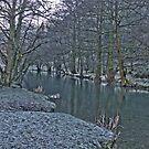 River Dove by dannyphoto