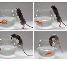 My new pet fish :) by Ellen van Deelen