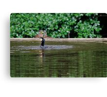 Cormorant and Co. Canvas Print