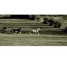 gallop Photographic Print