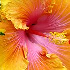 giant hibiscus by tego53