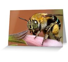 Blue Banded Bee Greeting Card
