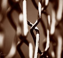 Fenced in & Moody by Lisa Rodriguez