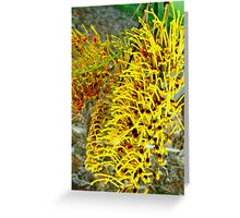 silky oak - grevillea - detail Greeting Card