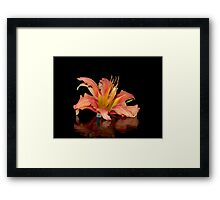 Reflection of the Old Fashion Daylily Framed Print