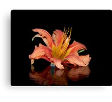Reflection of the Old Fashion Daylily Canvas Print