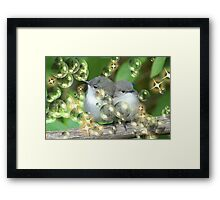 Fluffy Card for Christmas? Framed Print