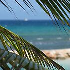 Palm in Jamaica by HaleyRenee