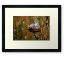 Evolution of a Wildflower Framed Print