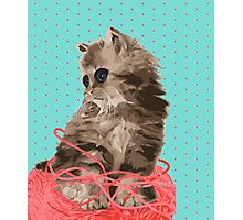 Messy Lil Cat Photographic Print