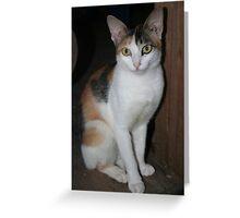 Indonesian Cat Greeting Card