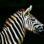 Zebra Calm by laureenr