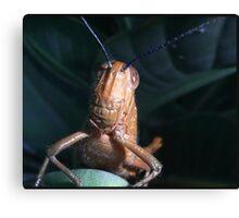 Grasshopper Macro Canvas Print