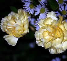 Carnations by laureenr