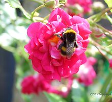 Bumble Bee by Louise Brown