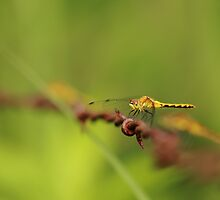 Dragonfly on a Wire by Brian Dodd