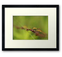 Dragonfly on a Wire Framed Print