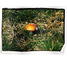 Red and white spotted toadstool Poster