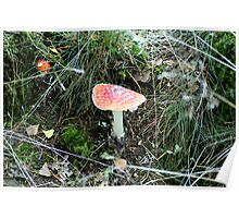 A different kind of toadstool red with white spots.. Poster