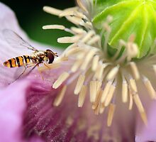 so much pollen, so little time by nadine henley