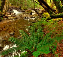 Hugel River valley by Kevin McGennan