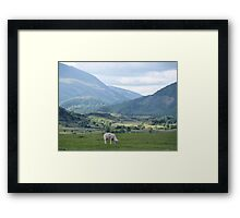 So much green and only one little sheep Framed Print
