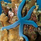 Blue Starfish by Marcel Botman
